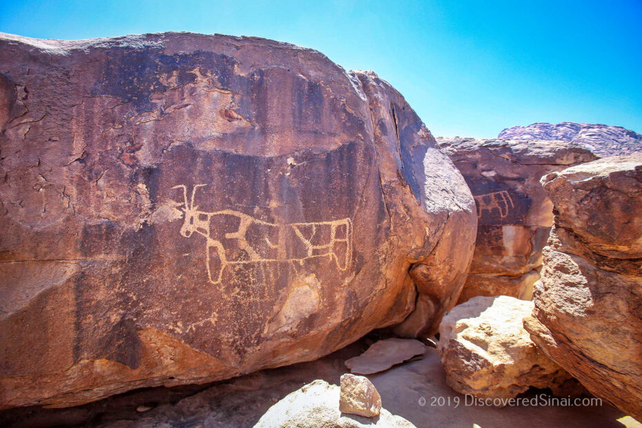 The cow petroglyphs in front of Jabal Maqla. Is this the area the golden calf was worshipped?