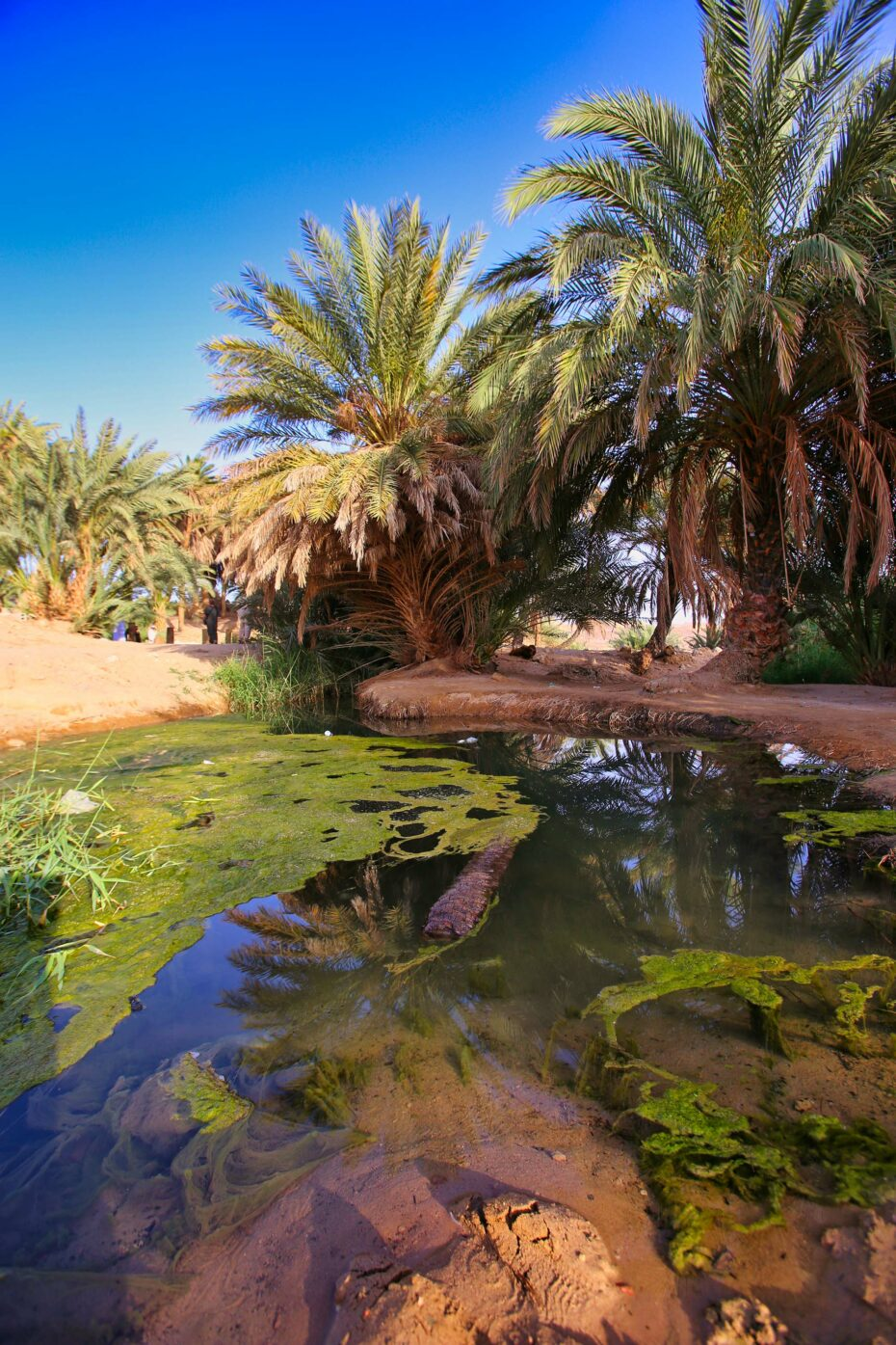 The oasis of Magna which still has a few springs bubbling up out of the ground.